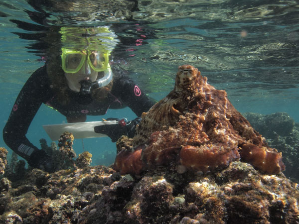 Sy communes with a Pacific Day Octopus in Moorea: credit David Scheel
