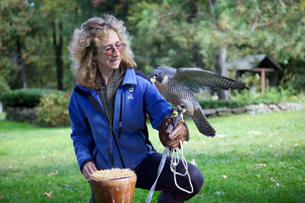 Sy with Banshee, a peregrine falcon at New Hampshire School of Falconry: credit Keith Ellenbogen