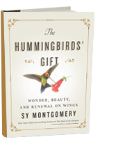The Hummingbirds gift: Wonder, Beauty, and Renewal on Wings